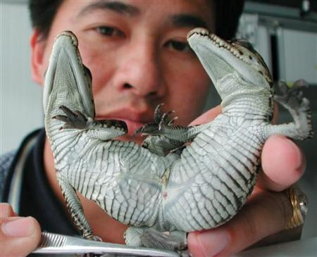 世界上最奇怪的动物之一:转载