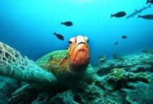 ocean's acidic shift