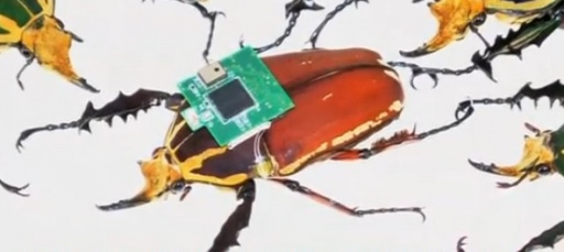 Cyborg beetles to the rescue