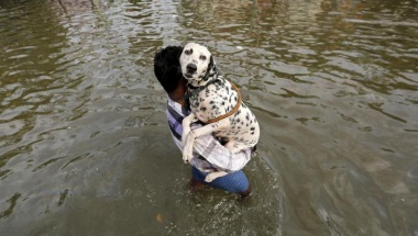 A man carries a dog as he wades through a flooded street in Chennai December 3, 2015. REUTERS/Anindito Mukherjee