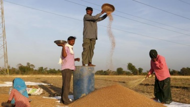 A farmer standing on a plastic drum winnows wheat in a field on the outskirts of Ahmedabad, India, March 29, 2016. REUTERS/Amit Dave/Files