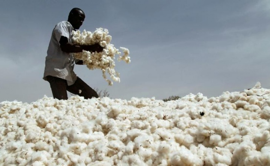 How Monsanto cotton sowed trouble in Africa