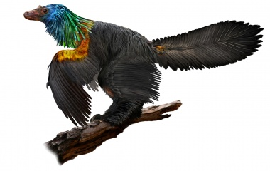 Chinese 'rainbow dinosaur' had feathers like hummingbirds