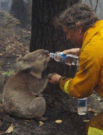 火事 山 オーストラリア の 南オーストラリア州カンガルー島山火事の影響について オーストラリア/アデレード特派員ブログ