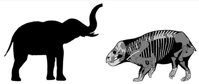 Una comparación del Lisowicia bojani con un elefante reciente se muestra en esta ilustración que es entregada el 21 de noviembre de 2018. Tomasz Sulej y Grzegorz Niedzwiedzki/A través de REUTERS