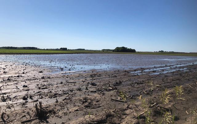 Puddles are seen in farm fields as heavy rains caused unprecedented delays in U.S. corn planting this spring, near Sheffield, Illinois, U.S., June 13, 2019. REUTERS/Tom Polansek