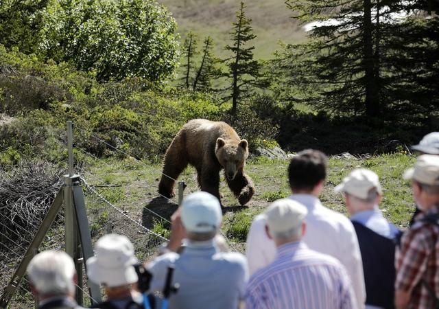 Visitantes observan a Napa el oso en el santuario Arosa Baerenland en un resort de la montaña en Arosa, Suiza. 25 de junio de 2019. REUTERS/Arnd Wiegmann.
