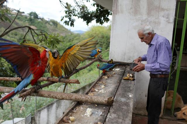 Vittorio Poggi alimenta a las guacamayas en su casa fuera de Caracas, Venezuela. 18 de de junio de 2019. REUTERS/Manaure Quintero.