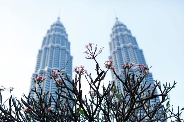 FILE PHOTO: Flowers bloom in front of the Petronas Towers in Kuala Lumpur December 10, 2014. REUTERS/Olivia Harris/File Photo