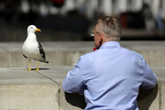 FILE PHOTO: A seagull and a man look at each other on a warm spring day in the financial district of Canary Wharf in London, Britain May 4, 2018. REUTERS/Kevin Coombs