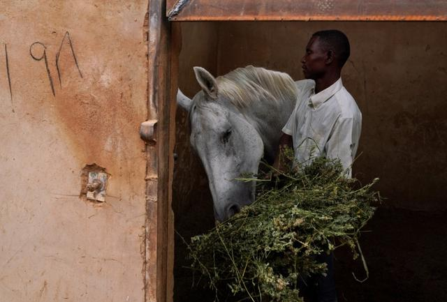A worker feeds a horse at a private stable at the Equestrian Club, in Khartoum, Sudan, June 27, 2019. The club has had to cut back activities since popular unrest erupted in December and led to the fall of autocratic President Omar al-Bashir in April. REUTERS/Andreea Campeanu