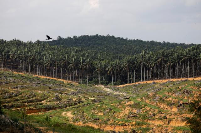 FILE PHOTO: Land that has been cleared is pictured at an oil palm plantation in Johor, Malaysia February 26, 2019. REUTERS/Edgar Su/File Photo
