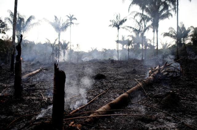 FILE PHOTO: A charred trunk is seen on a tract of Amazon jungle that was recently burned by loggers and farmers in Iranduba, Amazonas state, Brazil August 20, 2019. REUTERS/Bruno Kelly