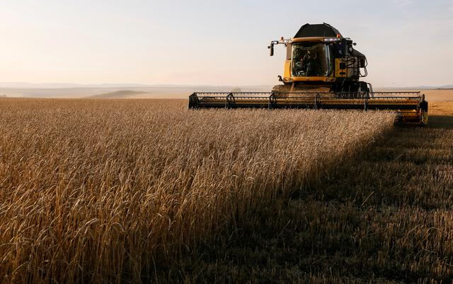 FILE PHOTO: A combine harvests wheat in a field of the Solgonskoye private farm outside the Siberian village of Talniki in Krasnoyarsk region, Russia September 7, 2018. REUTERS/Ilya Naymushin