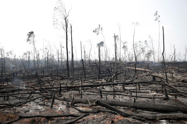 Charred trunks are seen on a tract of Amazon jungle that was recently burned by loggers and farmers in Porto Velho, Brazil August 23, 2019. REUTERS/Ueslei Marcelino