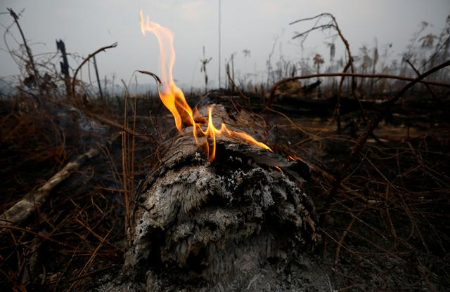FILE PHOTO: A tract of Amazon jungle is seen after a fire in Boca do Acre, Amazonas state, Brazil August 24, 2019. REUTERS/Bruno Kelly/File Photo