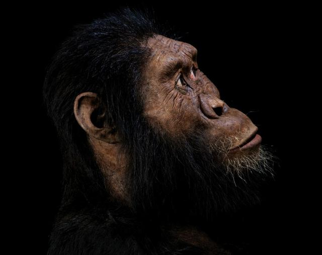 A facial reconstruction by John Gurche of the species Australopithecus anamensis, based on a nearly complete cranium fossil discovered in 2016 in Ethiopia, is seen in this photo released on August 28, 2019, in Cleveland, Ohio, U.S., Matt Crow/Cleveland Museum of Natural History/Handout via REUTERS