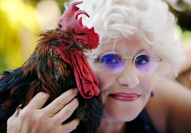 Corinne Fesseau poses with her rooster Maurice, whose loud crows landed him in court accused of noise pollution, in Saint-Pierre-d'Oleron, France August 31, 2019. REUTERS/Regis Duvignau