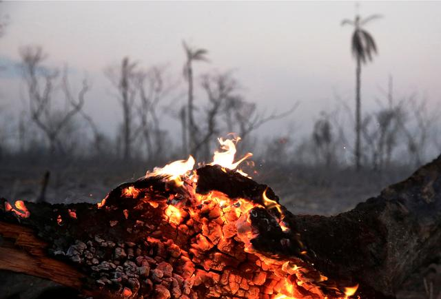 A tree trunk burns at the Guarani Nation Ecological Conservation Area Nembi Guasu in the Charagua region, an area where wildfires have destroyed hectares of forest, Bolivia August 29, 2019. REUTERS/David Mercado