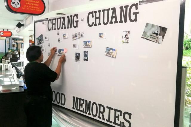 Una mujer coloca fotos en un pizarrón desde de que el panda de 19 años Chuang Chuang murió en el zoológico  Chiang Mai , Tailandia, 19 de septiembre de  2019. Dailynews/ via REUTERS