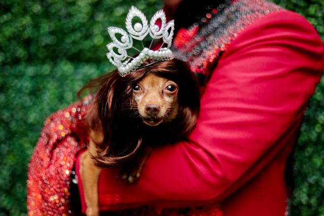 A pet dog dressed as a crowned Miss Universe is photographed at a pet fashion show celebrating World Animals Day in Quezon City, Metro Manila, Philippines, October 6, 2019. REUTERS/Eloisa Lopez
