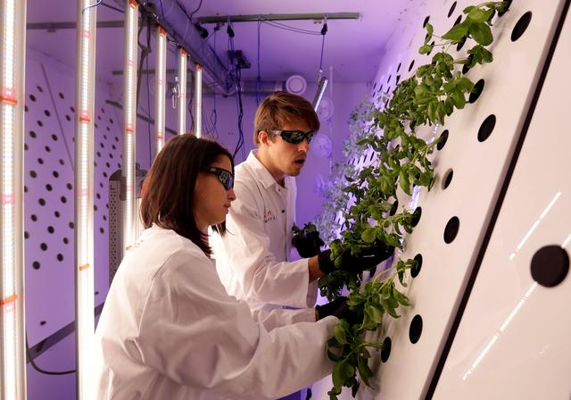 Scientists check plants inside of an aeroponic growing chamber system as an experiment called Marsonaut at Prague University of Life Sciences in Prague, Czech Republic, October 30, 2019.    REUTERS/David W Cerny