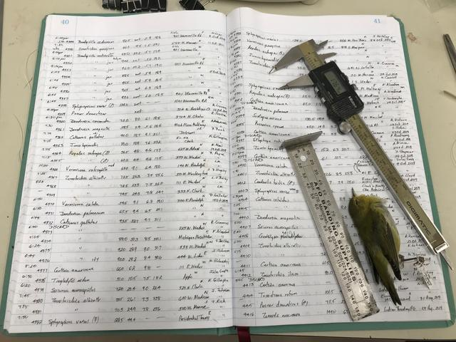Ledgers recording body size measurements, measuring tools and a Tennessee Warbler belonging to Field Museum scientist, Dave Willard, who took measurements of 70,716 bird specimens of migratory birds that died in collisions with buildings in Chicago over a period of about four decades are pictured in this photo released on December 4, 2019. Field Museum/Kate Golembiewski/ Handout via REUTERS