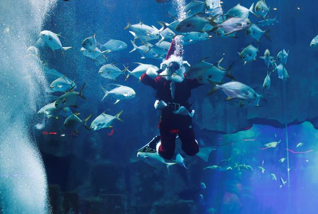 A diver dressed as Santa Claus swims with fishes at the Aquarium of Paris, France, December 4, 2019. REUTERS/Gonzalo Fuentes