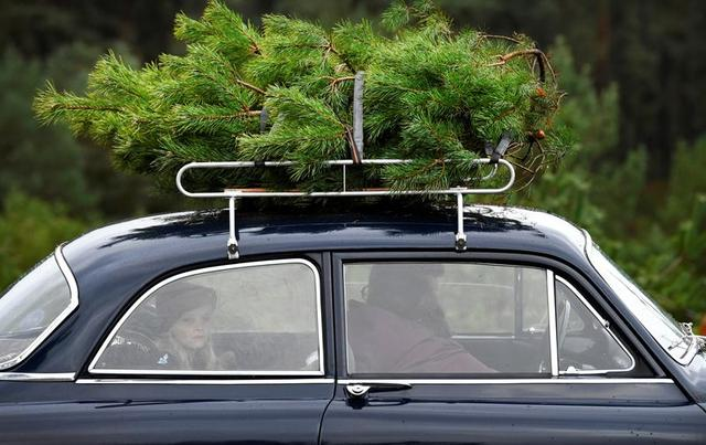A family puts a Christmas tree that they sawed on top of the car to take home for free at The Dutch Hoge Veluwe National Park in Otterlo, Netherlands December 7, 2019.  REUTERS/Piroschka van de Wouw