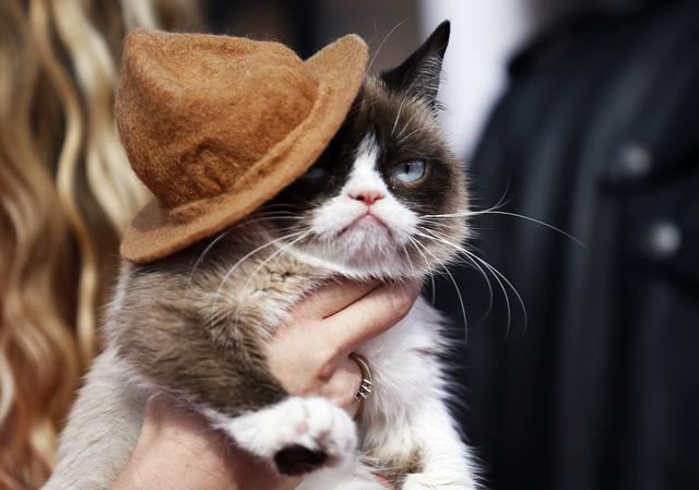 FILE PHOTO: Grumpy cat arrives at the 2014 MTV Movie Awards in Los Angeles, California  April 13, 2014.    REUTERS/Danny Moloshok