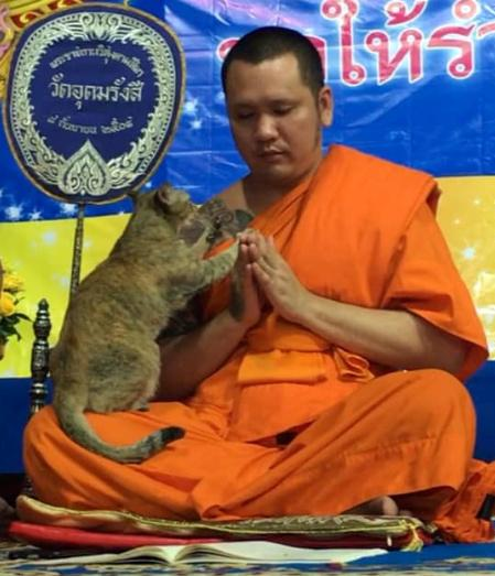 A temple cat clings to buddhist monk during solemn Buddhist prayers for the new year, in Bangkok, Thailand December 31, 2019 in this picture taken from social media video. COURTESY FLASH NOPHAYONG SOOKPHAN/via REUTERS