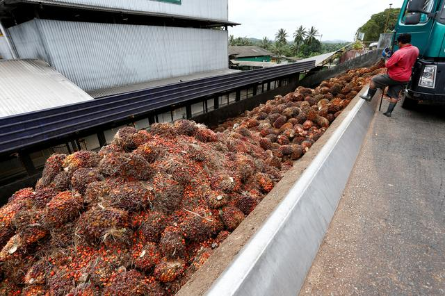India Palm Import Curbs To Start Malaysia Indonesia Price War Association