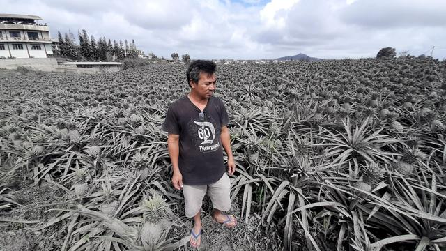 Farmer Jack Imperial, 49, poses for a portrait in his pineapple plantation covered with ash from the erupting Taal Volcano, in Tagaytay, Philippines, January 15, 2020. REUTERS/Adrian Portugal