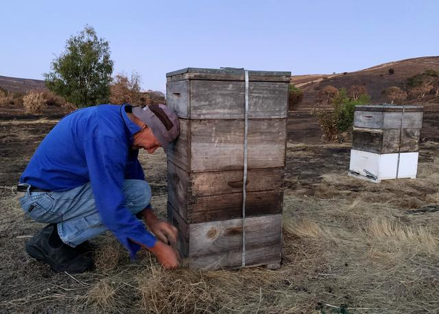 Peter Davis, owner of Island Beehive, locks Ligurian beehives to prepare them for transport on Kangaroo Island, Australia, January 21, 2020.  REUTERS/Stefica Nicol Bikes