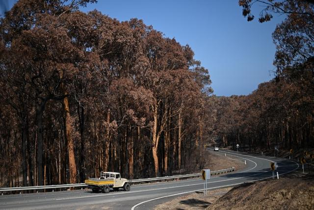 FILE PHOTO: A truck drives past charred trees burnt during the recent bushfires near Batemans Bay, New South Wales, Australia, January 22, 2020.  REUTERS/Loren Elliott