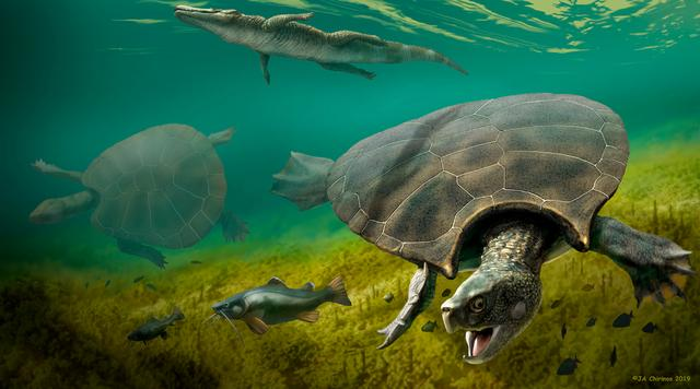 The huge extinct freshwater turtle Stupendemys geographicus, that lived in lakes and rivers in northern South America during the Miocene Epoch, is seen in an illustration released February 12, 2020.   J. A. Chirinos/Handout via REUTERS.