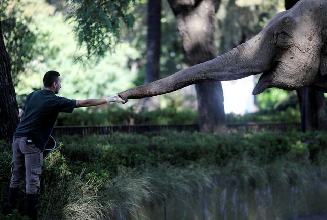 Un veterinario le ofrece manzanas a la elefanta asiática Mara, de 54 años, en su recinto en el exzoológico de la ciudad conocido ahora como Ecoparque en Buenos Aires, Argentina. 18 de febrero, 2020. REUTERS/Agustin Marcarian