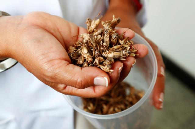 Dr. Daylan Tzompa Sosa holds a handful of crickets at Ghent University, Belgium February 27, 2020.  REUTERS/Francois Lenoir