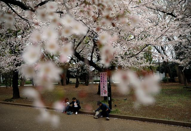 People sit on the ground as they enjoy viewing blooming cherry blossoms during the first weekend after Tokyo Governor Yuriko Koike (not pictured) urged Tokyo residents to stay indoors in a bid to keep the coronavirus disease (COVID-19) from spreading, at Ueno park in Tokyo, Japan March 28, 2020. REUTERS/Issei Kato
