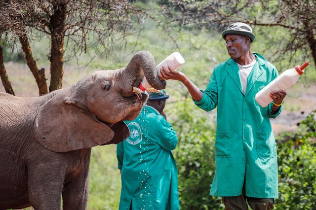 FILE PHOTO: A keeper feeds an orphaned baby elephant with milk from a bottle during feeding time normally attended by many visitors but now has none due to the spread of the coronavirus disease (COVID-19), at the David Sheldrick Elephant Orphanage near Nairobi, Kenya April 2, 2020.  REUTERS/Baz Ratner