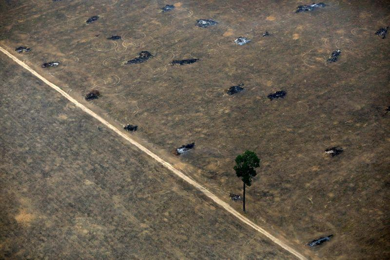 Deforestation in Brazil's Amazon surges, Bolsonaro readies troops