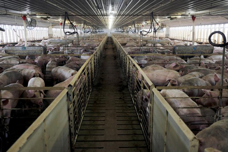 Surge in U.S. pork exports to China led by Brazil's JBS, China's WH Group