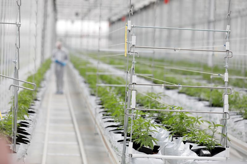 post-image-Analysis: U.S. states votes legalizing marijuana to drive growth despite election uncertainty