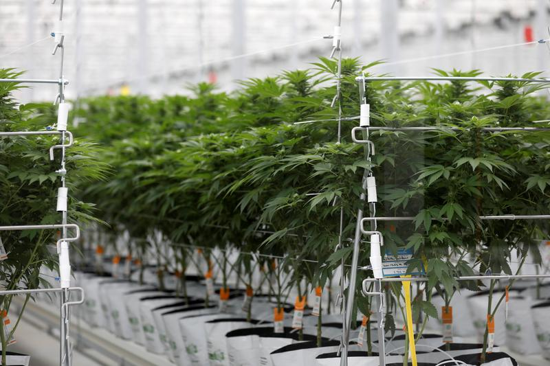 post-image-Reddit rally in cannabis stocks stubbed out