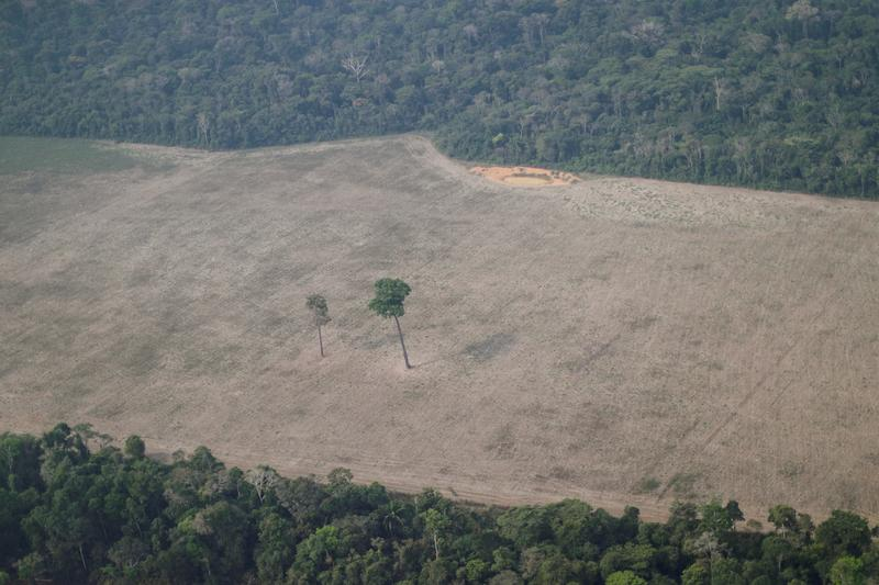 brazil-must-show-amazon-protection-is-working-top-donor-norway-says