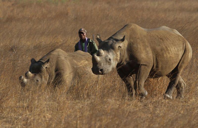 Zimbabwe re-introduces rhinos in Gonarezhou park after three decades